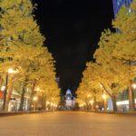 赤れんが庁舎の夜景