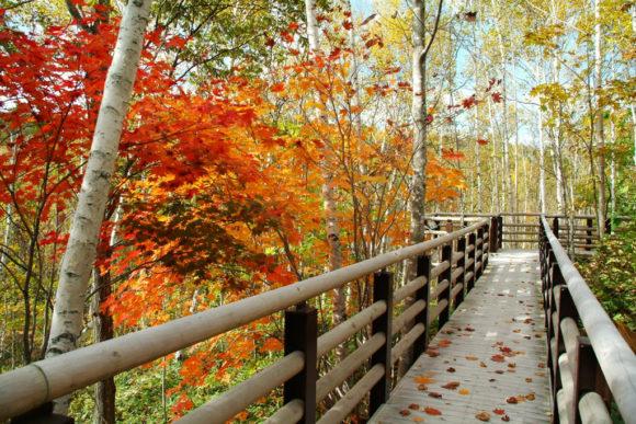 滝野すずらん公園の紅葉