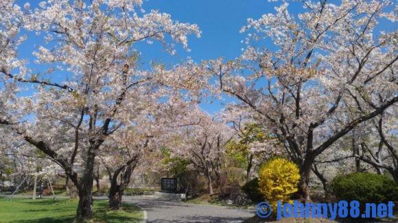 5月の戸田記念墓地公園