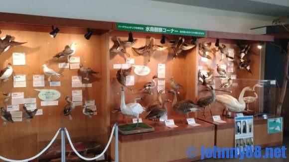水鳥観察館