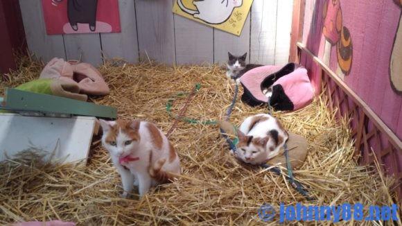 アースドリーム角山農場の猫