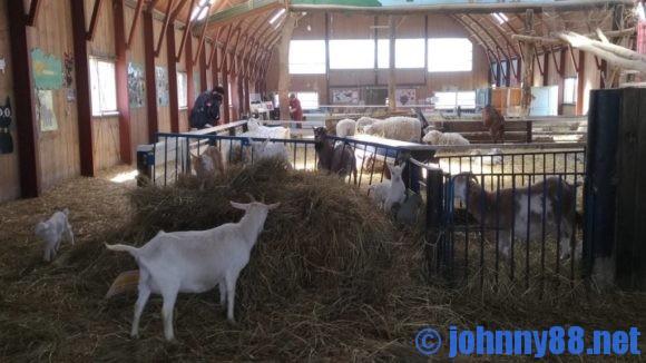アースドリーム角山農場のふれあい館