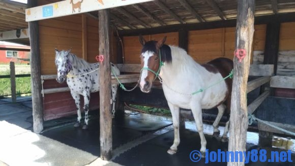 アースドリーム角山農場の引馬体験
