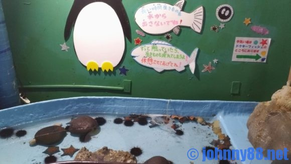 稚内市立ノシャップ寒流水族館のタッチプール