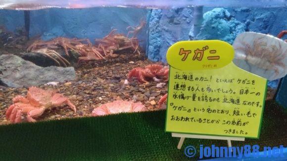 稚内市立ノシャップ寒流水族館