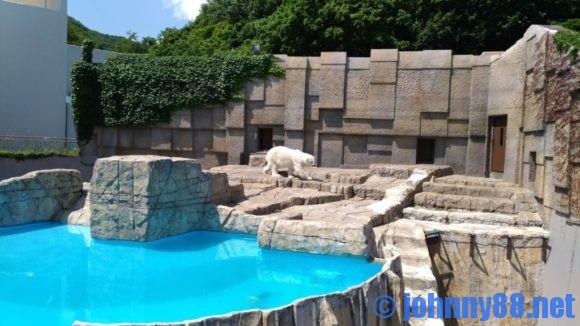 円山動物園のホッキョククマ「ララ」