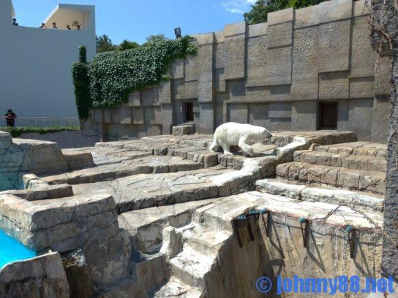 円山動物園のホッキョククマ