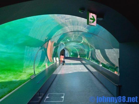 ホッキョククマ館の水中トンネル