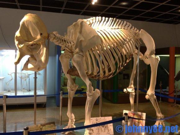 円山動物園の骨格標本