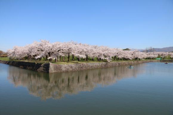 五稜郭公園お堀の桜