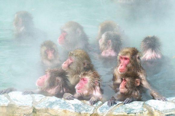 函館市熱帯植物園サル山の温泉
