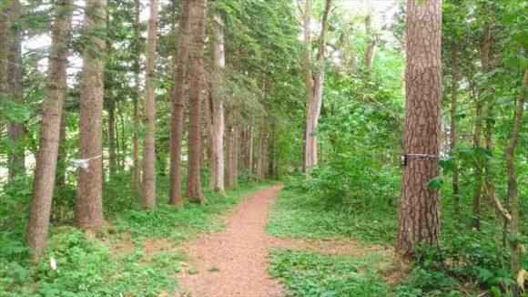 外国樹見本林