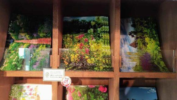 上野ファームおすすめ「丘のふもとの小さな苗屋」&NAYAカフェ