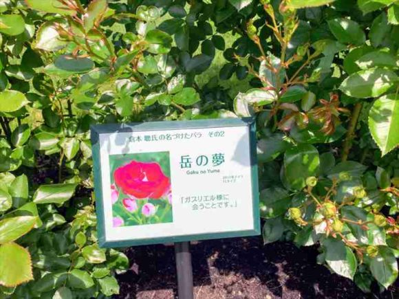 「風のガーデン」の薔薇の庭