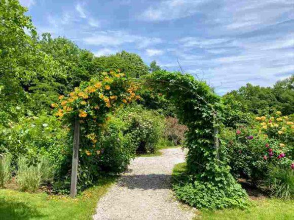 風のガーデン「野の花の散歩道」