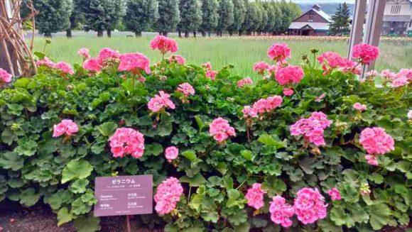 ファーム富田のグリーンハウス