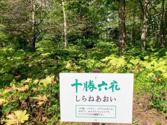 六花の森内にある「十勝六花」