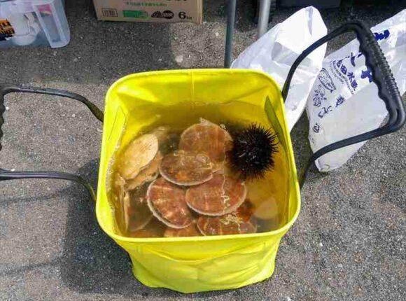 厚田漁港朝市で購入したホタテ
