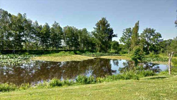 北村中央公園ふれあい広場キャンプ場の池