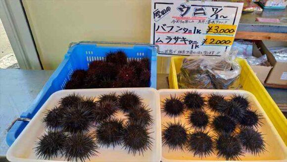 厚田漁港朝市のウニ販売価格