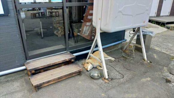 ワンダーランドサッポロの看板犬