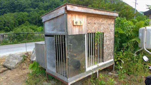 せりちゃんの犬小屋