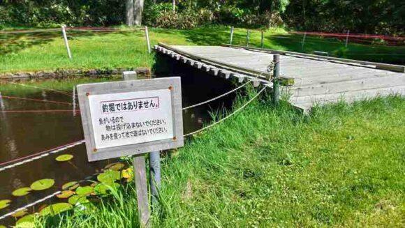 北広島市自然の森キャンプ場の池