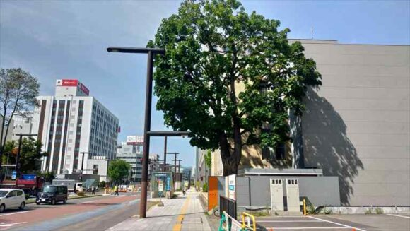 北菓楼札幌本館と楡の木