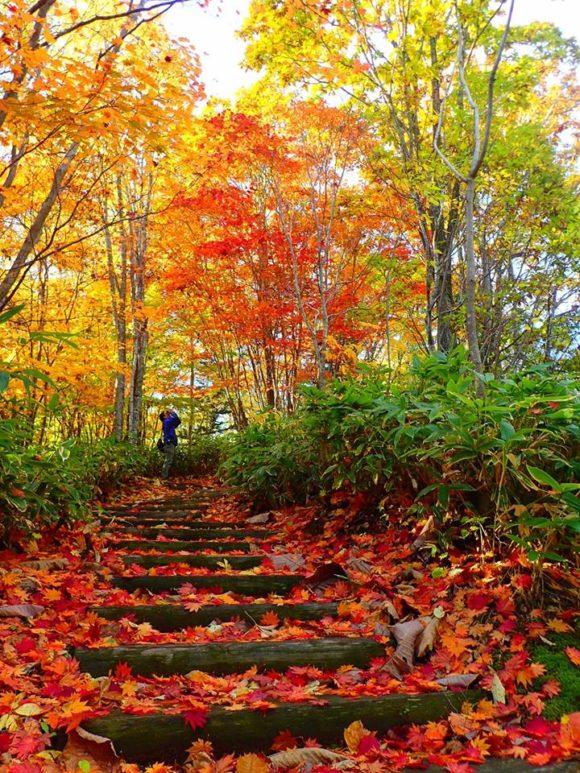 滝野すずらん公園の遊歩道の紅葉じゅうたん