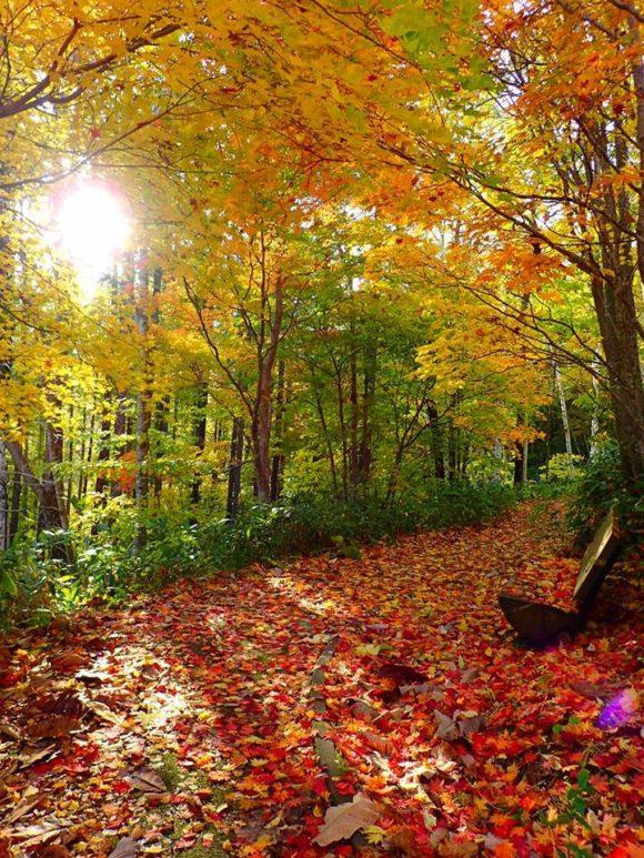 滝野すずらん公園の遊歩道に積もった紅葉