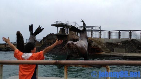 おたる水族館の海獣ショー