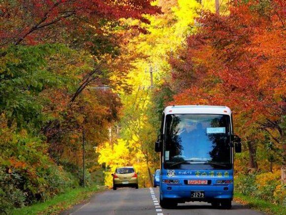 札幌定山渓の紅葉の中を走る観光バス